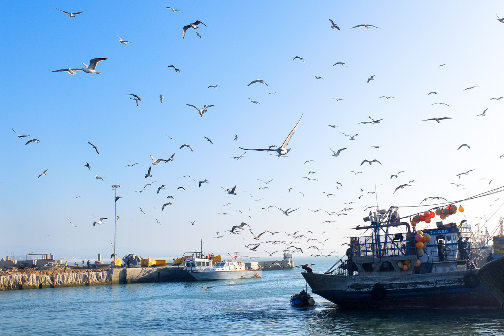 Essaouira port in afternoon